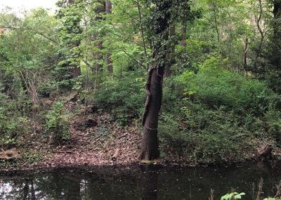 Tiergarten Park (1)