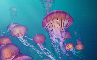 Coping With Jellyfish During Your Gap Year in Israel